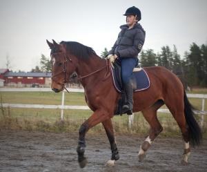 hest 2